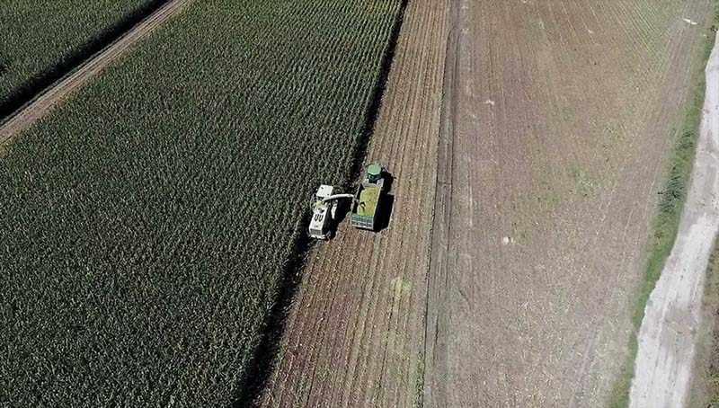 Lavorazione campi azienda agricola Jemma - trinciatura mais